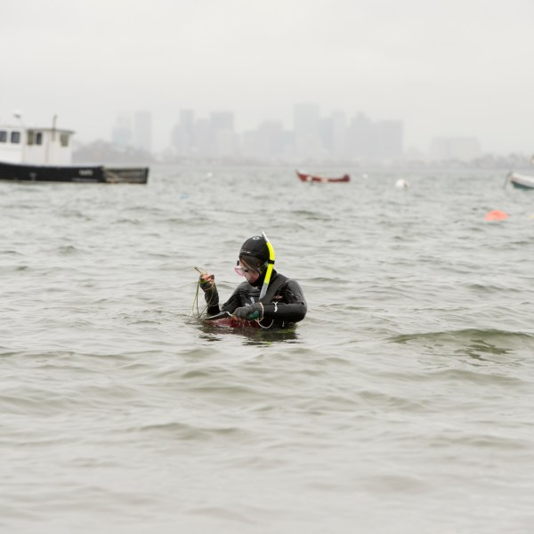 A diver in the water at the Marine Science Center with the Boston skyline behind them.