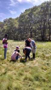 COSA students leading the Beach Sisters in marsh exploration