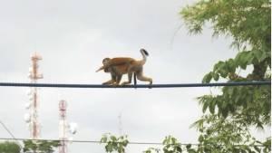 MonkeyBridge