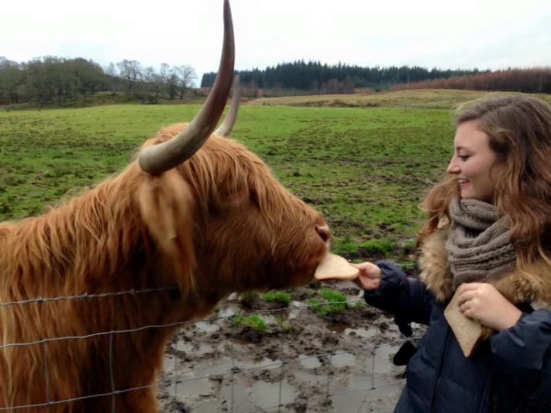 Meghan Davis, a BNS major, with a Scottish hair cow.