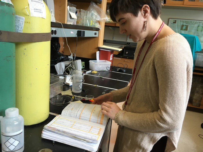 Erin Cole works at a lab bench.