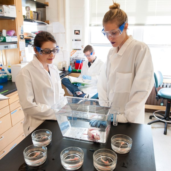 two female students observe axolotl salamanders on lab bench in the Monaghan lab