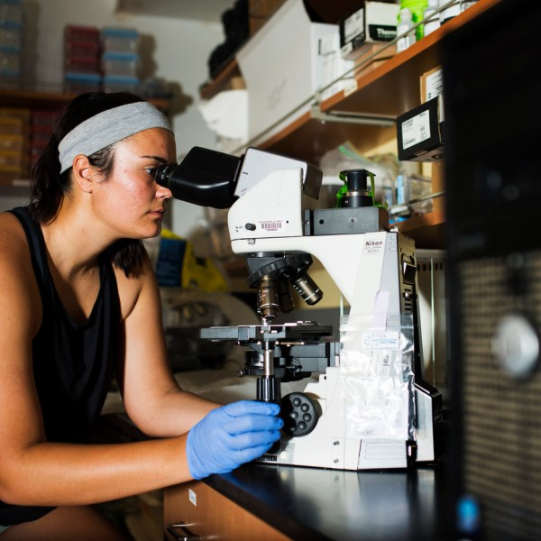 A student looks through a microscope at a lab bench.