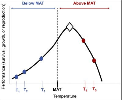 The hypothetical example above demonstrates a marine populations growth across a spectrum of mean annual temperatures (MAT). There is a natural incline below MAT, a peak at ideal temperatures (diamond), and a significant decline in above MAT. Graphic provided by Randall Hughes