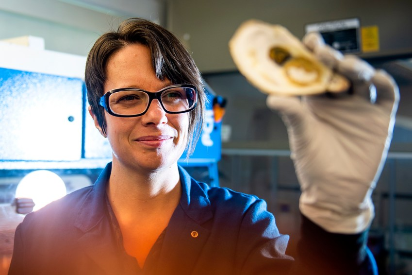 Katie Lotterhos, assistant professor in marine and environmental Sciences, holds up an oyster in her lab in Nahant. Lotterhos recently received a grant to work with a consortium of scientists across the East Coast to breed a better oyster. Photo by Ruby Wallau/Northeastern University