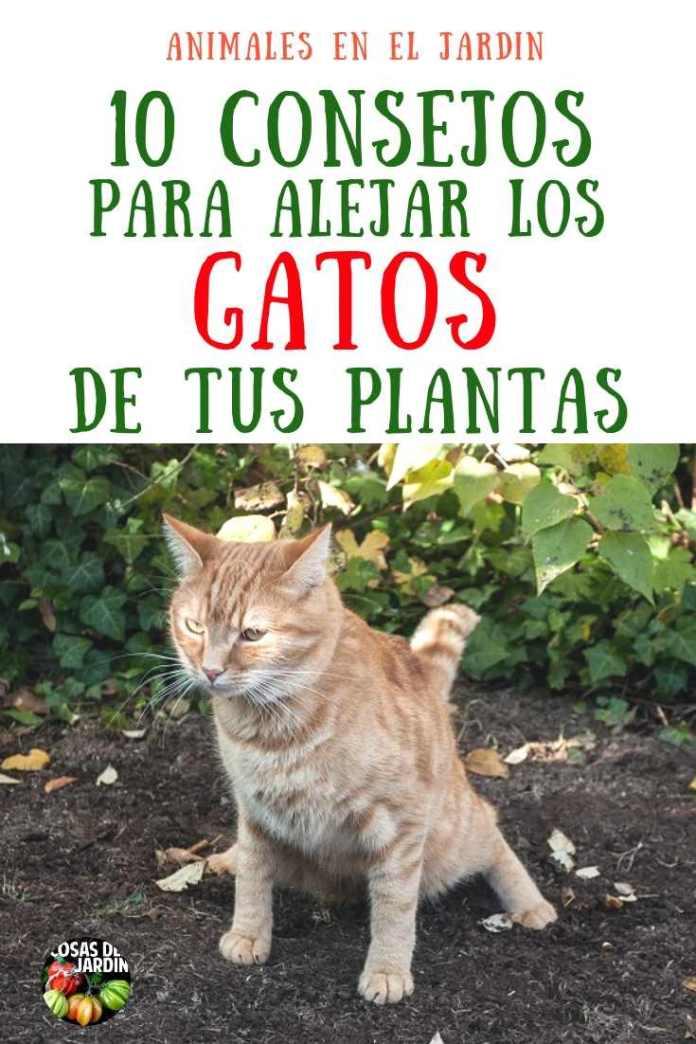 10 consejos para mantener a los gatos lejos de tus plantas for Como ahuyentar gatos del jardin