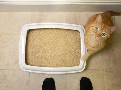 Mejor arena para gatos