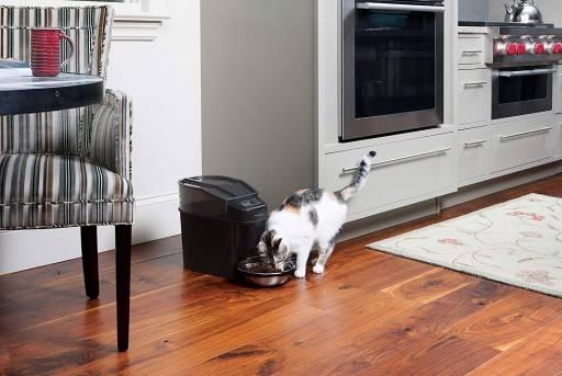 Mejores comederos automáticos para gatos