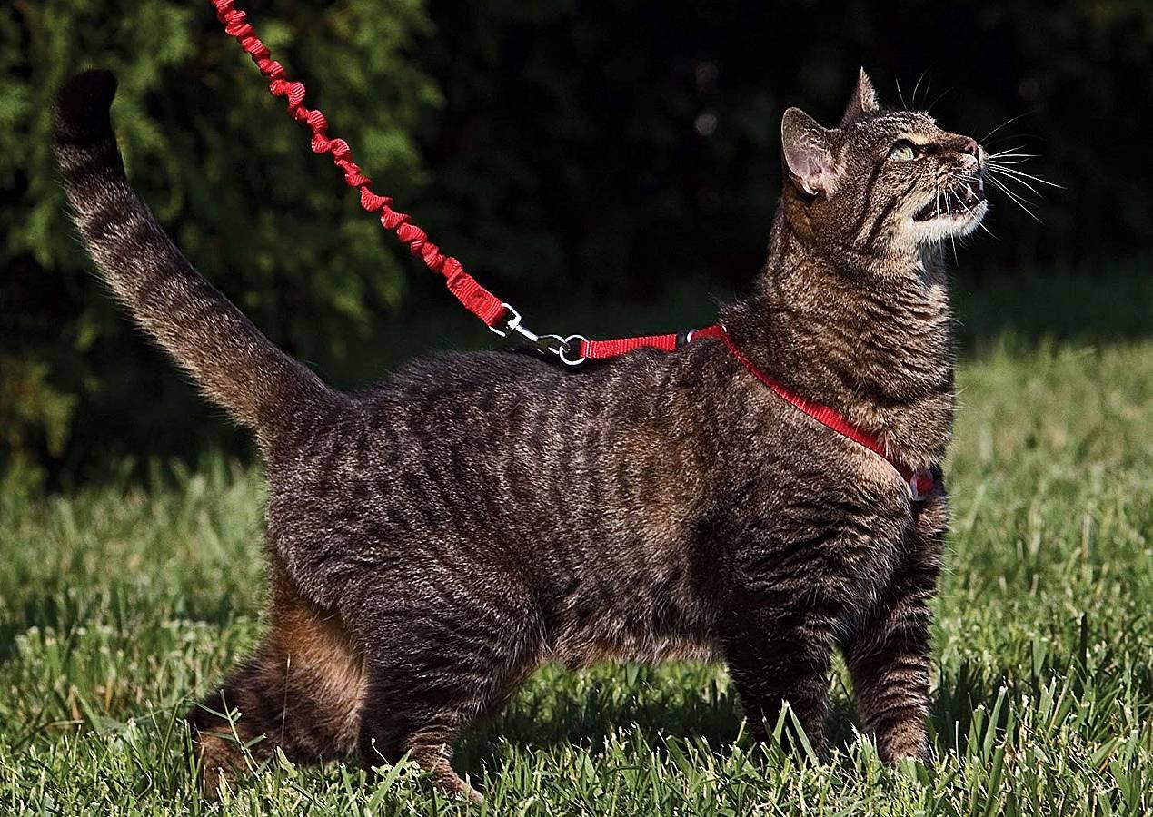 Mejores arneses para gatos