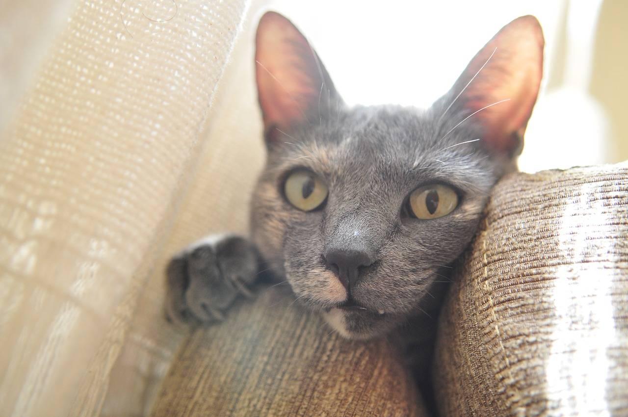 5 consejos para evitar que tu gato arañe los muebles