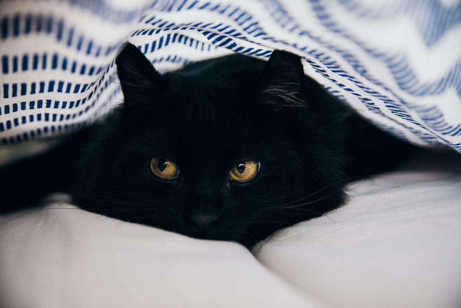 Supersticiones del gato negro Creencias de Buena y Mala Suerte