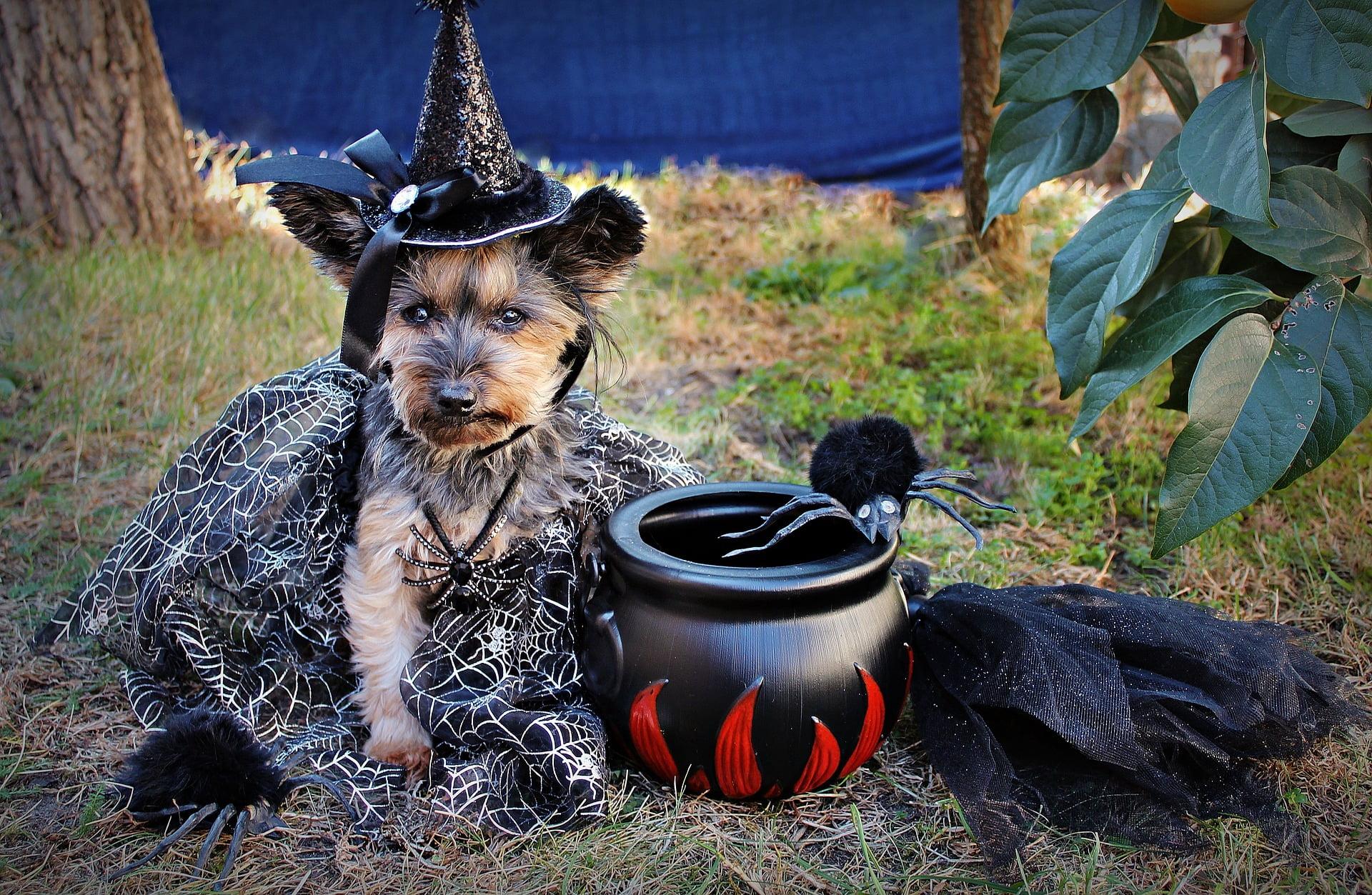 Mejores disfraces para perros