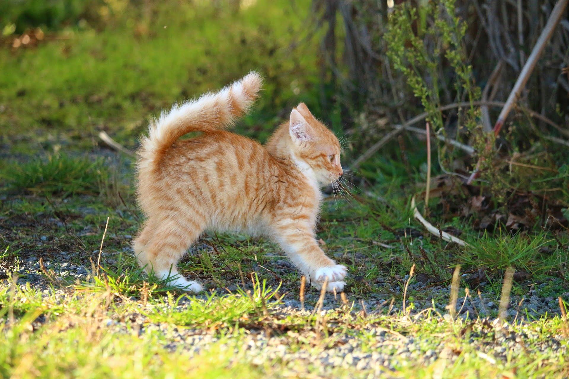 Lenguaje corporal de los gatos y entendiendo su comportamiento