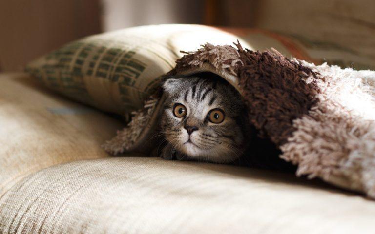 ¿Por qué los gatos tienen miedo a los pepinos? Los gatos tienen miedo de los pepinos
