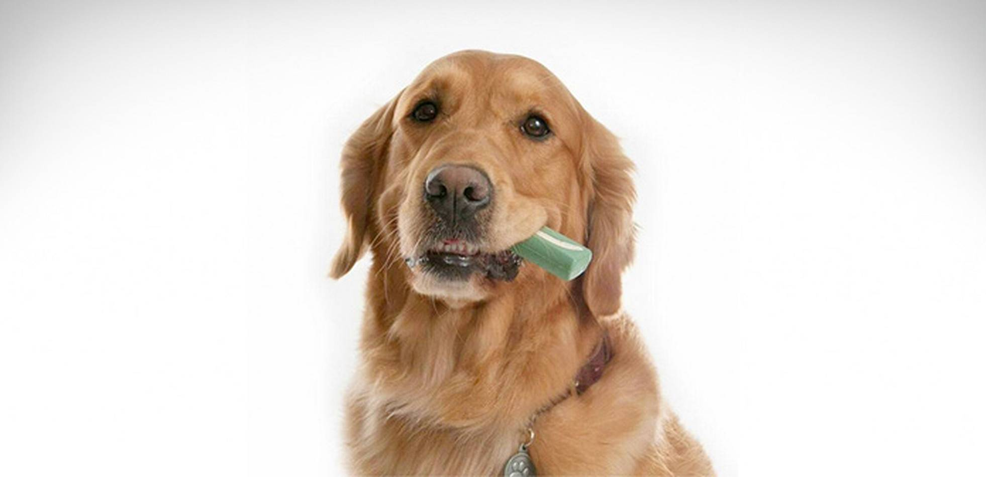 Masticación para perros para higiene Dental Merial Oravet