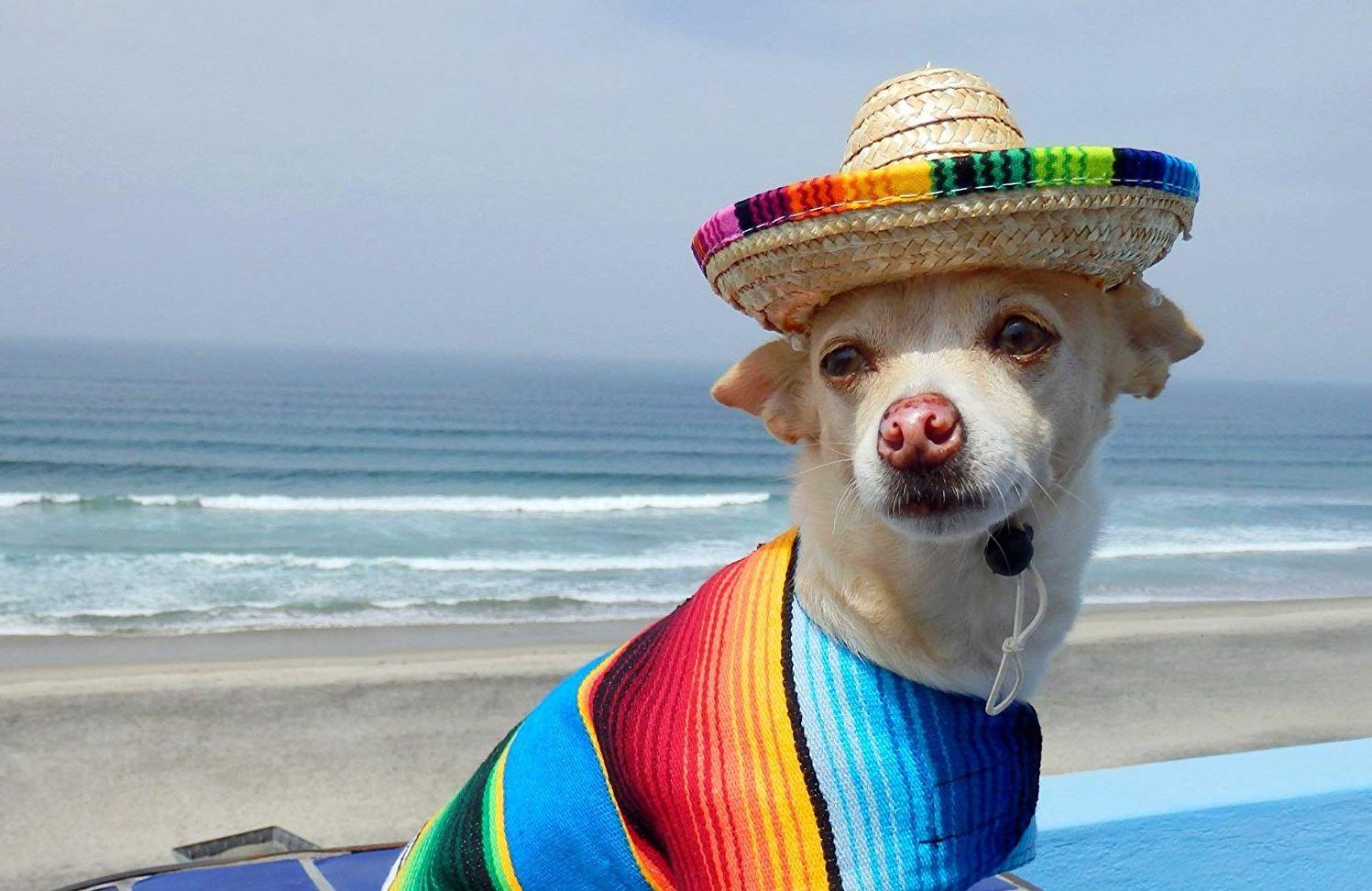 Los mejores sombreros para perros