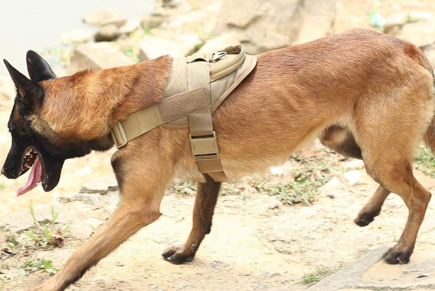 Chalecos tácticos para perros
