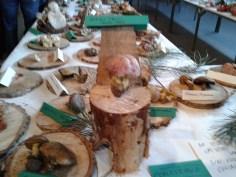 Exposición jornadas micologicas en los toriles-3