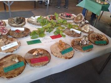 Exposición jornadas micologicas en los toriles-6