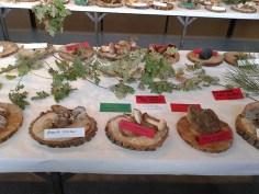 Exposición jornadas micologicas en los toriles-9
