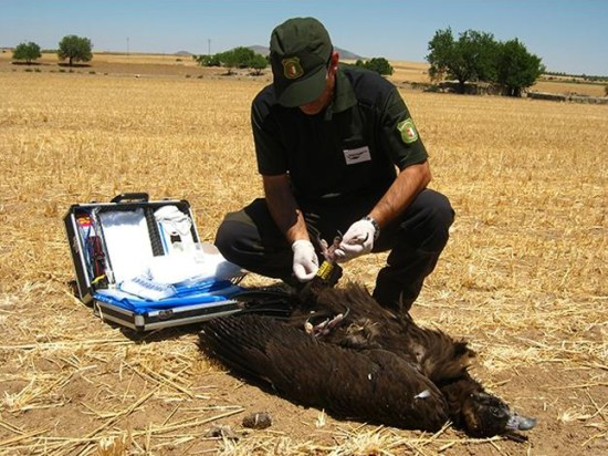 Asociación española de agentes forestales y ambientales.