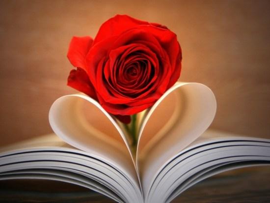 rosa_de_amor