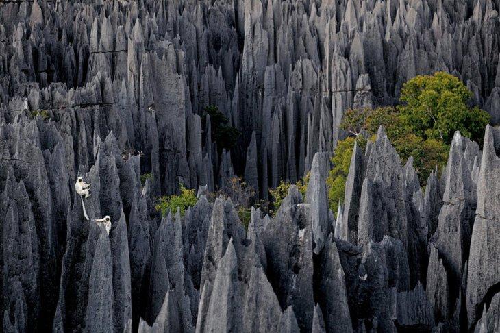 """Impresionantes vistas del """"bosque mineral"""""""