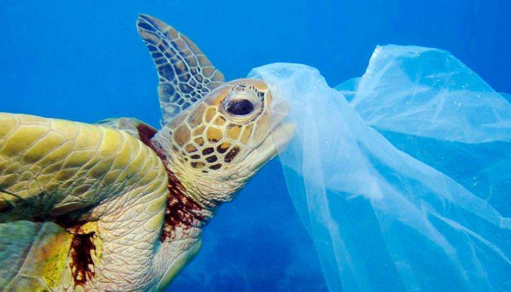 Tortuga con bolsa de plástico en el mar