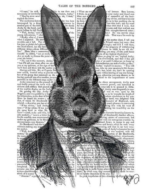 rabbit in suit