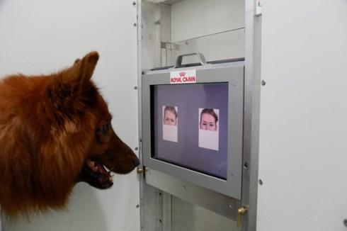 dog-human-faces-150212