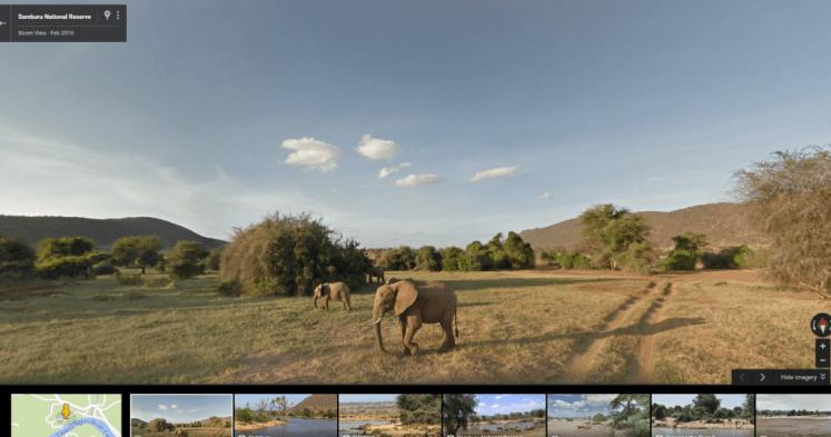 Google Maps Elephant