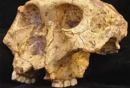skullDonne