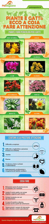 piante-velenose