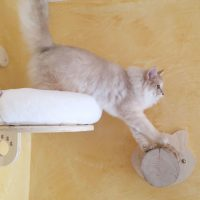 cose per gatti speciali ...