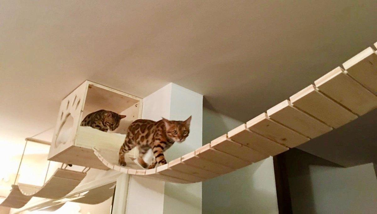 ponte tibetano per gatti cosedagatto.com
