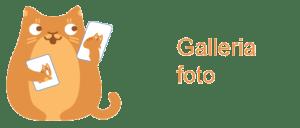 Galleria-foto cosedagatto