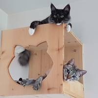 Cat's Home - Cubo