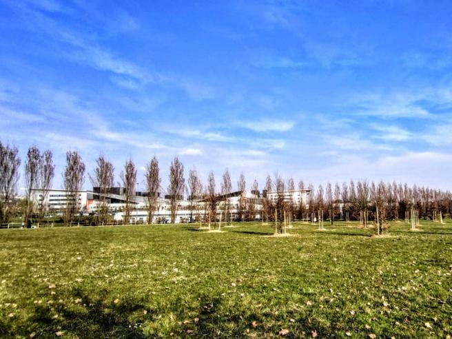 Parco della Trucca bosco della memoria