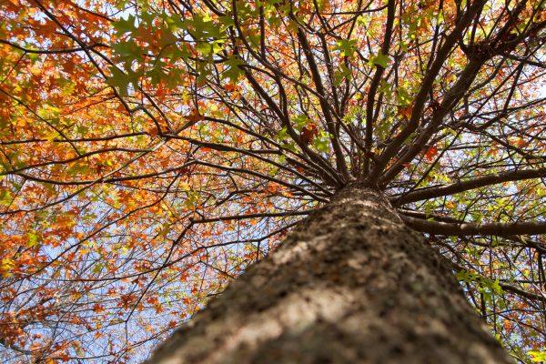 Foliage bergamasco