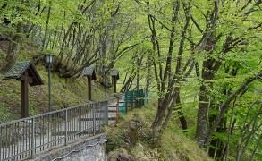 Il bosco intorno al Santuario del Perello