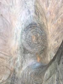 Le piume del pavone di Elia Ajolfi realizzate con Object Trouvè