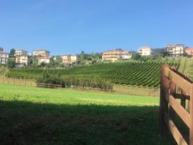 4 Vigne tenuta San Giovanni