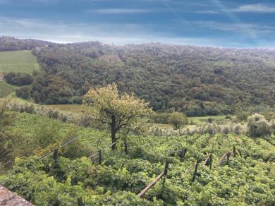 Azienda agricola Il Castelletto