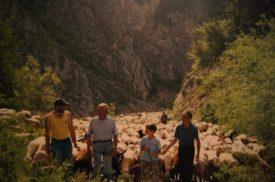 uomini davanti ad un gregge di pecore in movimento