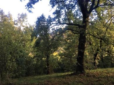 I boschi del monte