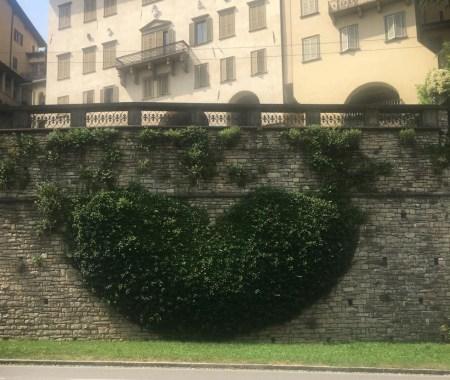 cuore di edera di Bergamo Alta