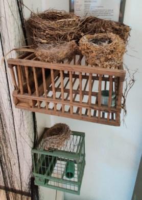 4 nidi di uccelli
