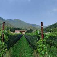 Nove Lune, i vini Super BIO della Valpredina che maturano nelle anfore di terracotta e non solo