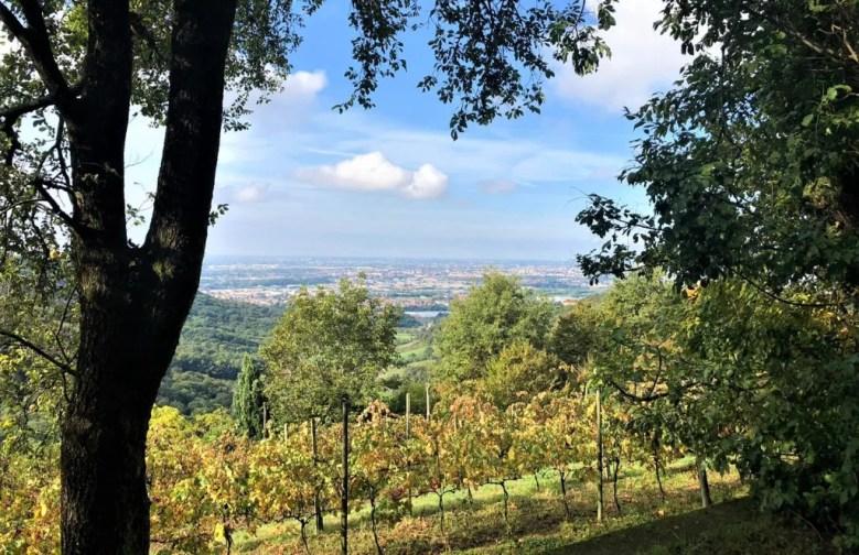 Cammino del Vescovado paesaggio visto dal bosco