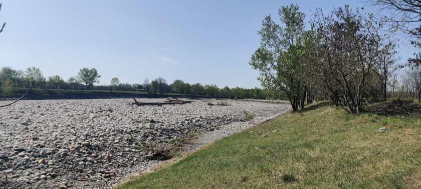 I tronchi nell'alveo del fiume Brembo